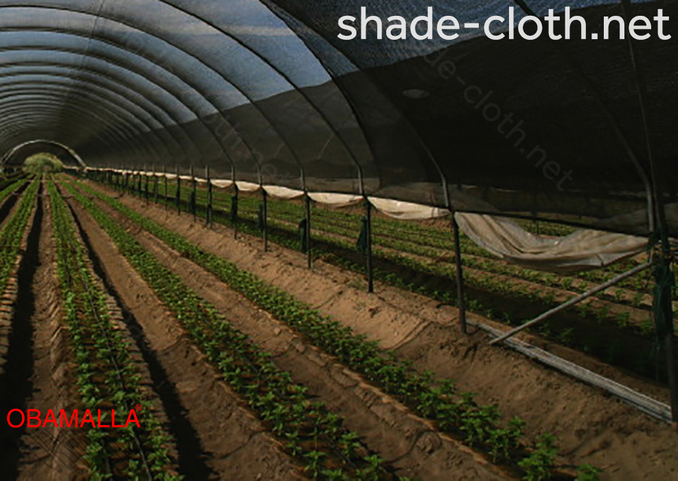shadehouse installed for protection of the crops.