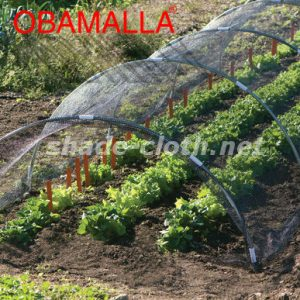 tunnel installed for taking care crops